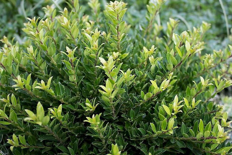 grabbepflanzung f r fr hjahr sommer herbst winter grabpflanzen himmelgr n. Black Bedroom Furniture Sets. Home Design Ideas